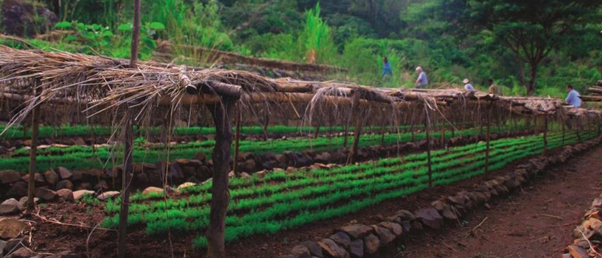2020 Äthiopien - Agrofrost Feld